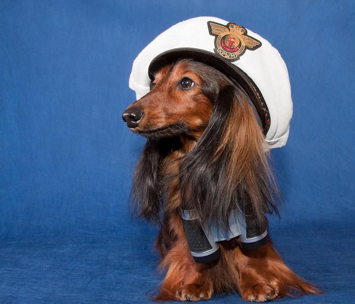 全世界的宠物主人们期待已久的萌宠装扮日