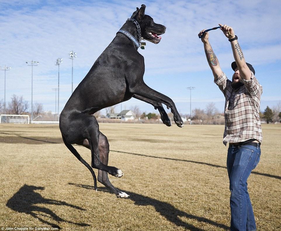 个子最高的动物
