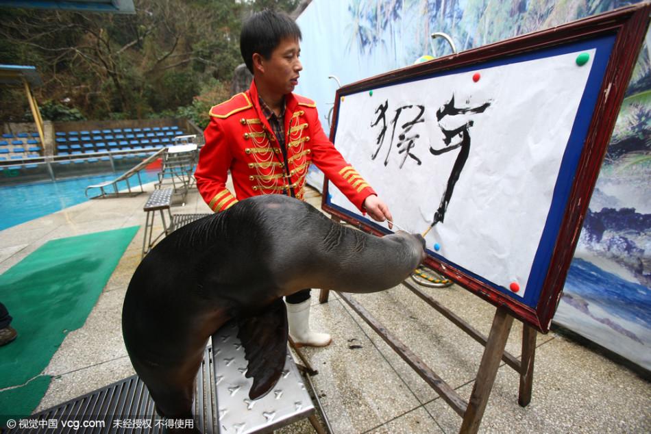 浙江宁波动物园金猴庆猴年