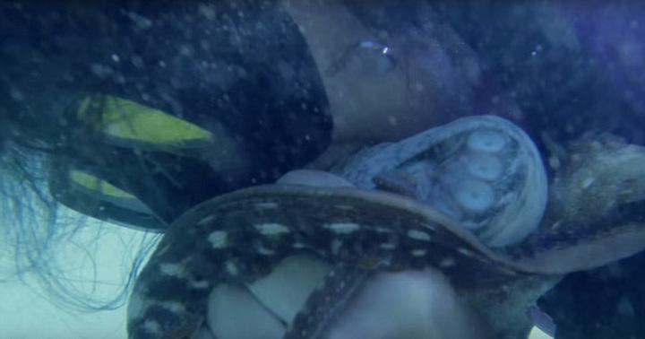 章鱼脱光手憋气近5分钟用牙咬死美女性感美女捕鱼图片