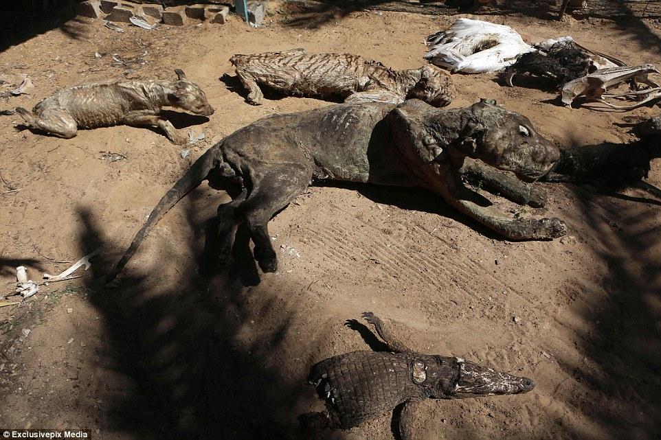 这可能是世界上最悲惨的动物园