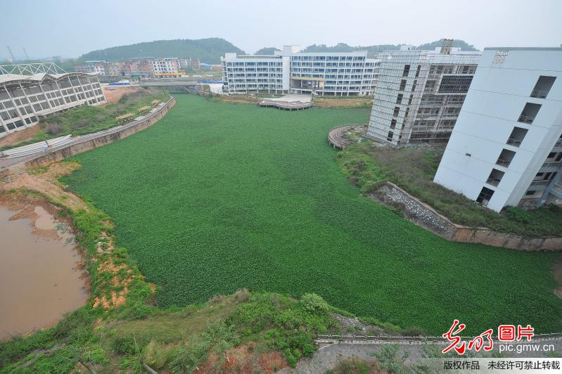 2016年4月14日,广西南宁市,在广西财经学院相思湖校区内,有一片水域