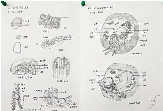 一名同学的参赛作品为生物各细胞结构示意图,获得了95分的好成绩。   对比课本上的原图,简直以假乱真,甚至比真的更令人惊艳。   为啥那么多高中生都迷上了画细胞?因为学军中学最近正在举办手绘动植物细胞大赛。   不止画得精细,还有学生在手绘细胞图上,针对每个细胞体,做了详细标注,感觉每张画都能拿来当生物参考书。   晒出这组图片的,是杭州学军中学生物老师高勇。他告诉记者,本次手绘动植物细胞大赛,来源于该校生物老师看到高一学生暑期生物作品时的灵光一闪,看他们画得这么好,作为老师,也想给