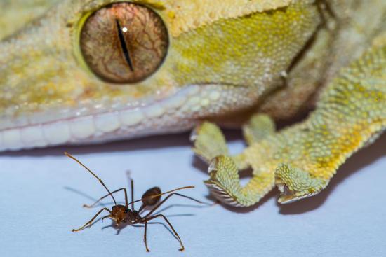 之间的区别就像人和蚂蚁
