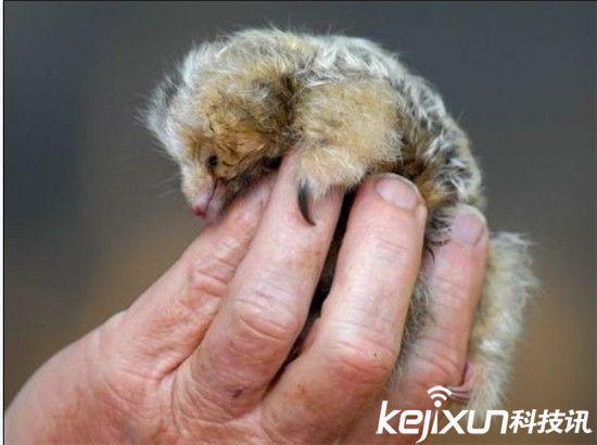 地球十大最可爱动物:毛毛虫竟然排第二?