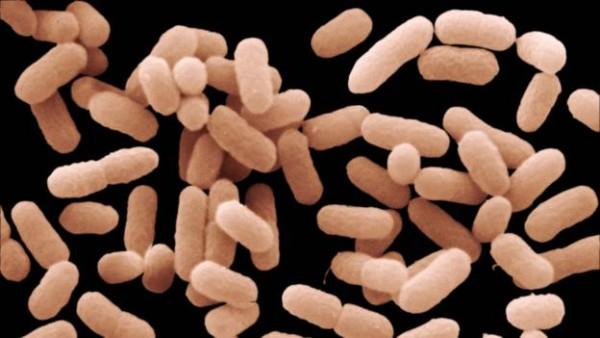 大肠杆菌细胞的每段基因末端都有一段奇怪的重复序列