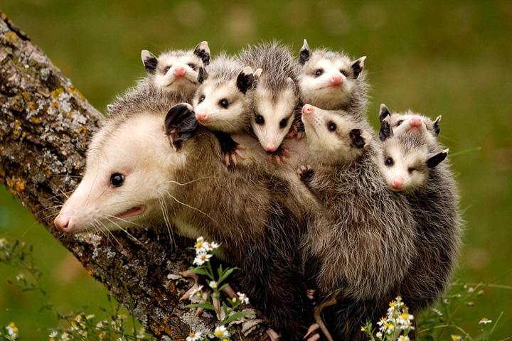 盘点动物宝宝和妈妈大玩爱的抱抱