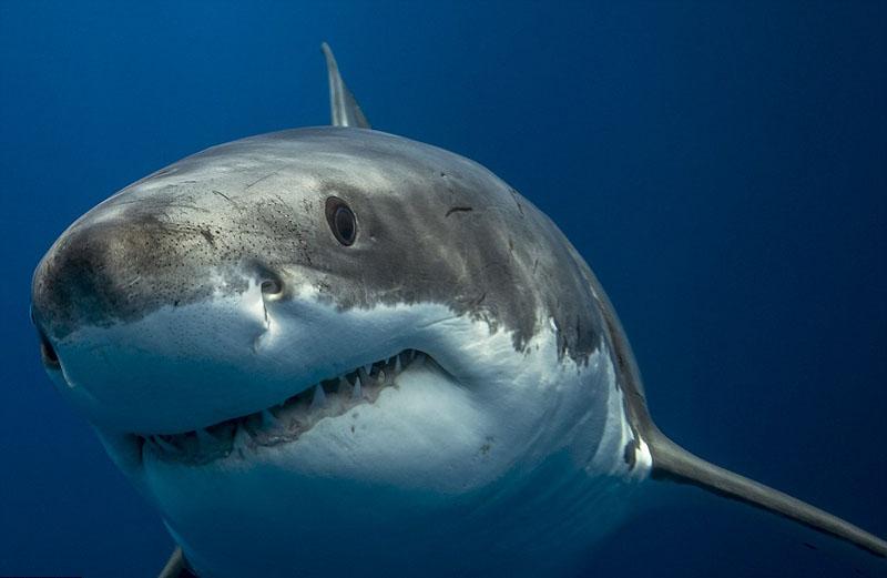 新西兰木匠为宣传环保赴澳拍深海动物