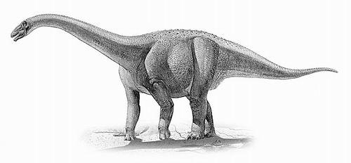 史前动物简笔画最大