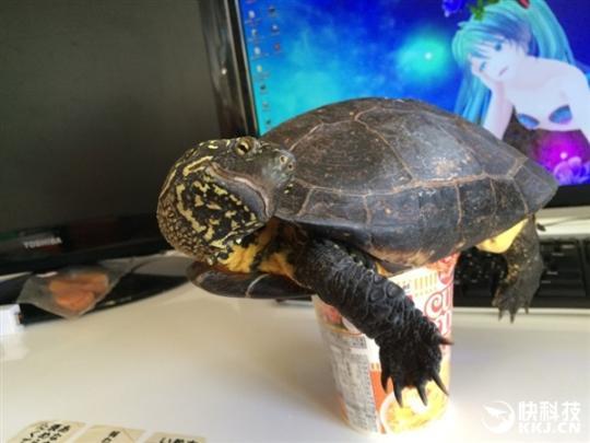 捏乌龟步骤图解