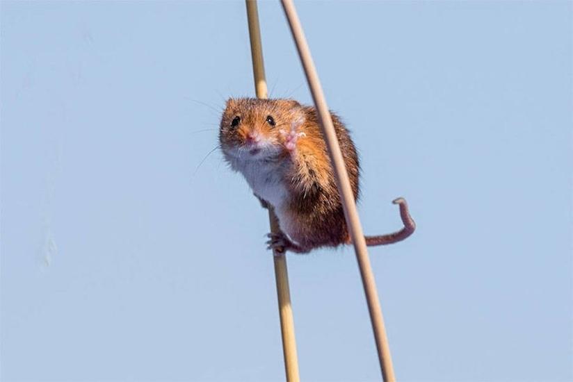 动物界奇葩 搞笑野生动物们的快乐生活