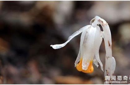 传说中的冥界之花原来长这样啊!