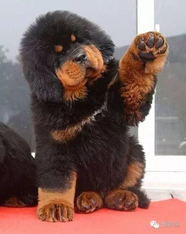 世界上最萌最可爱的20只小狗