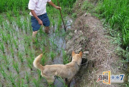 中国第一蛇人照片