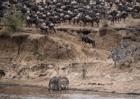 走進馬賽馬拉國家保護區