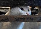 伪爱猫人残忍卖猫肉