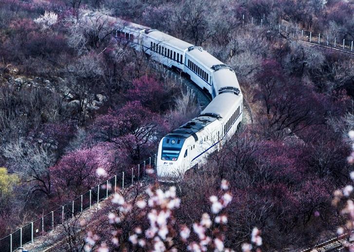 居庸关列车穿越花海
