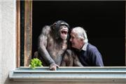 动物园重开 黑猩猩笑了.jpg