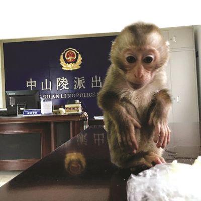 中国最可爱的动物