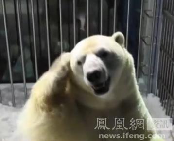 """春节快乐!北极熊双掌""""合十""""拜年(图)"""