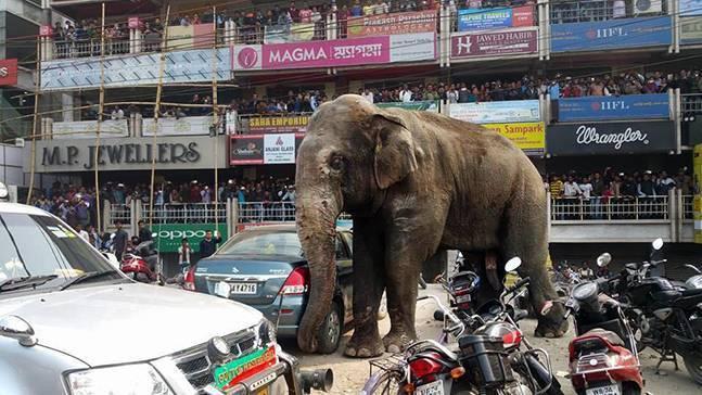 印度野象闯入街头 村民拍照围观