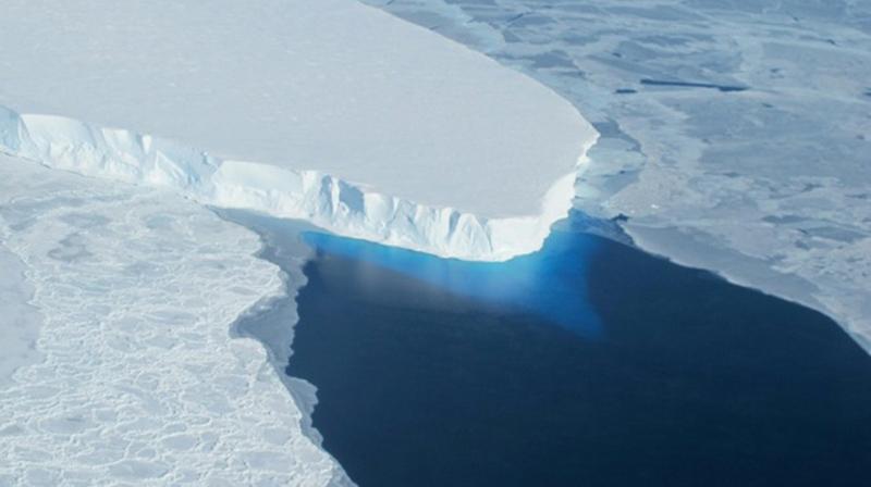 南极的一座冰山 干掉 了15万只企鹅