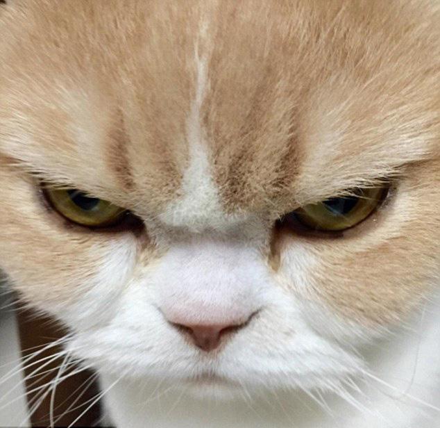 壁纸 动物 猫 猫咪 小猫 桌面 634_616