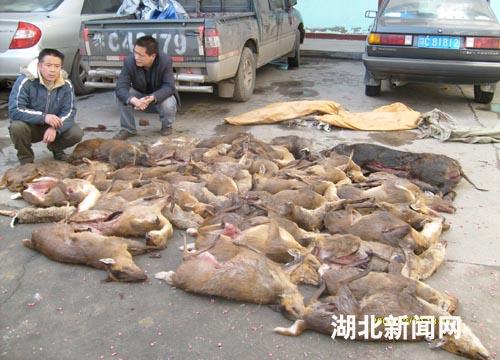 卖野生动物被诉 多被买给农家乐和高档会所