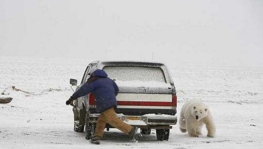 惊险 动物袭击人类的恐怖瞬间图片