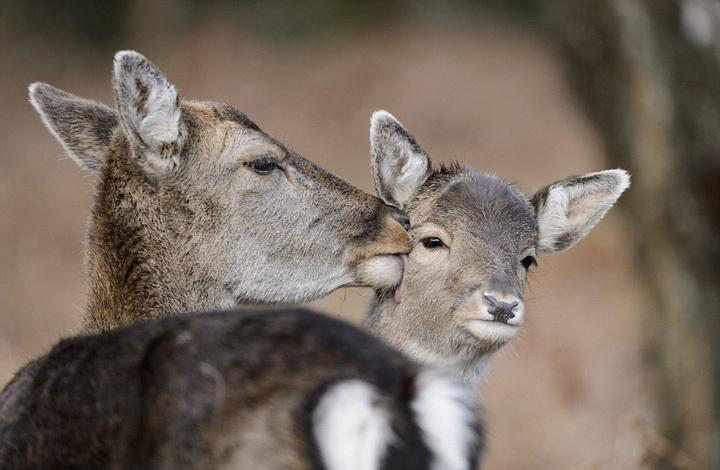 动物宝宝和妈妈大玩爱的抱抱