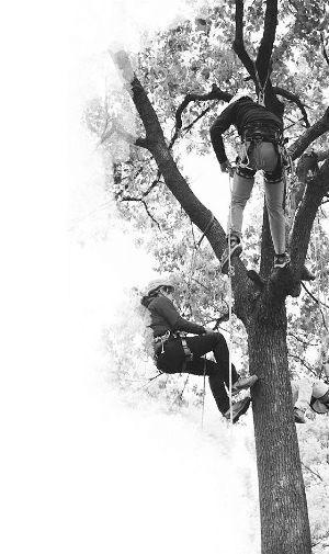 苏州校园将开设爬树课 爬得不好将计入学期成绩