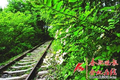 """""""爱情隧道""""藏身小镇 藤曼环绕铁路如仙境(图)"""