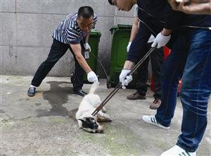 """舟山一""""疯狗""""咬伤47人后被毙 出现疫情可能性低"""