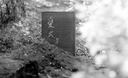 长春路边花池现宠物狗墓碑 土上还有黑色的灰烬