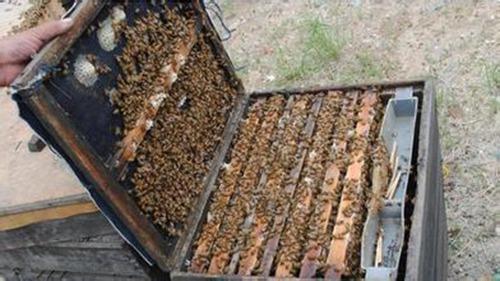 蜜蜂剪纸步骤折图解