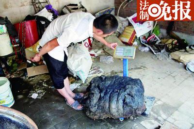 村民发明80公斤太岁