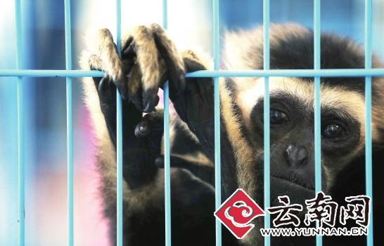 云南最大网络野生动物非法贸易案告破