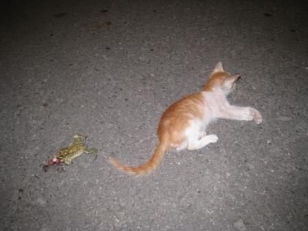 抓癞蛤蟆煮汤中毒导致一人死亡 蟾蜍毒素危害有多大?
