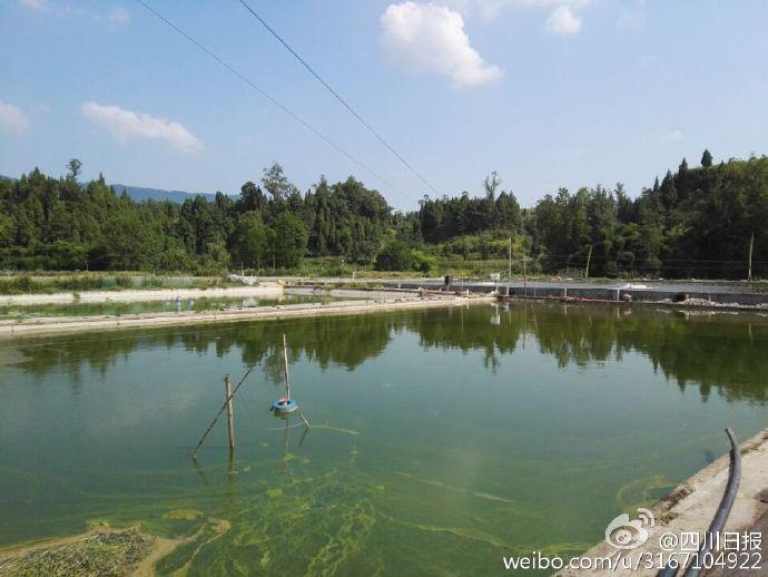 四川高温:3万斤鱼被热死了(图)