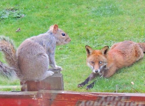 英松鼠敲窗求助 网友:这是要成精啊?【图】