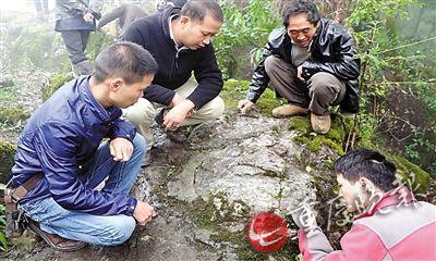 """重庆石头上""""开出比盘子还大的花"""" 秘密被揭开"""
