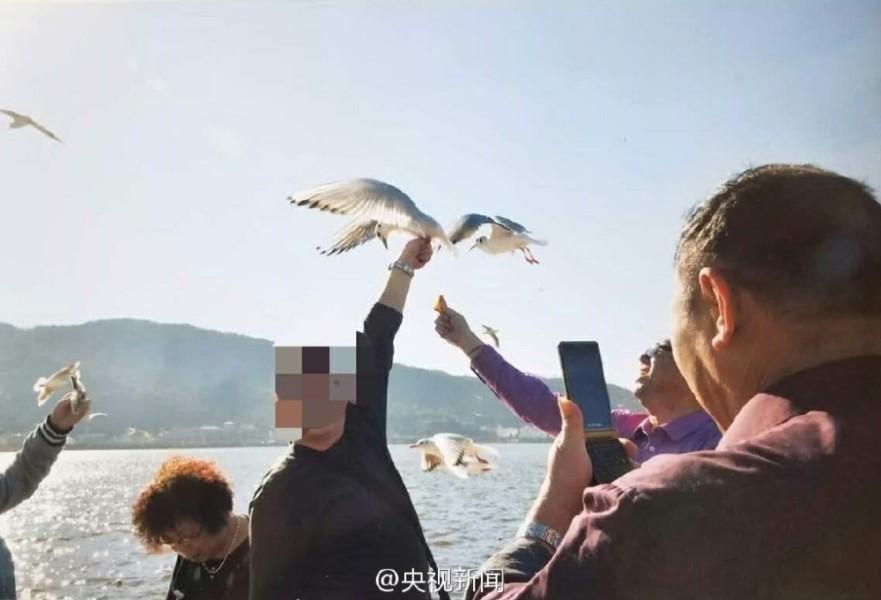 翅膀 海鸥/每年冬天,数万只红嘴鸥都会从遥远的西伯利亚飞往云南昆明滇池...