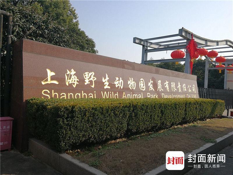 上海野生动物园回应10年养死5只熊猫:概率问题