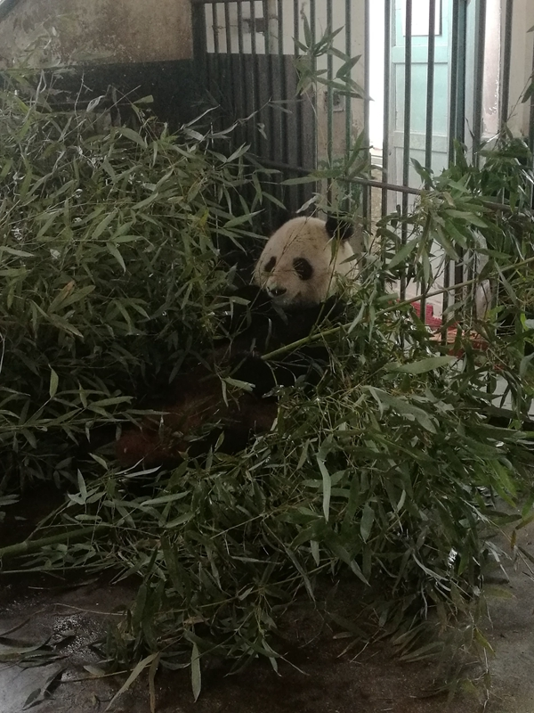 用竹叶编织小动物照片