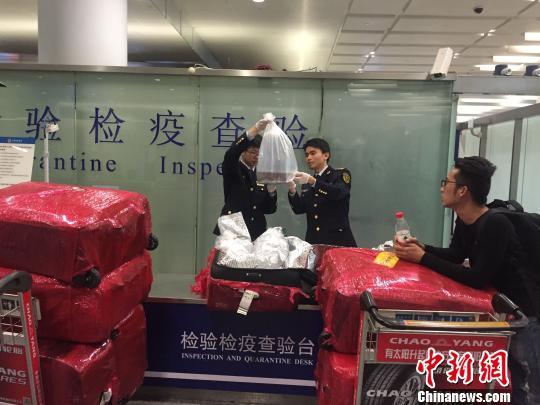 图为被截获的欧洲鳗鲡苗。杭州机场办供图