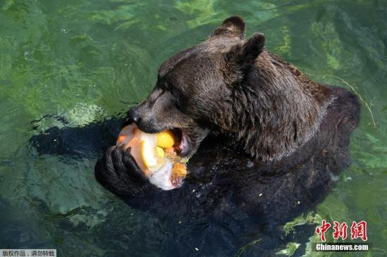 睡梦中遭黑熊啃咬头骨_露营须眉惊醒后捡回一命_大香蕉新闻乐点彩票大发不时彩