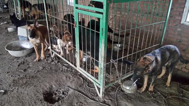 """北京警方查处""""猫狗肉黑色产业链""""窝点"""