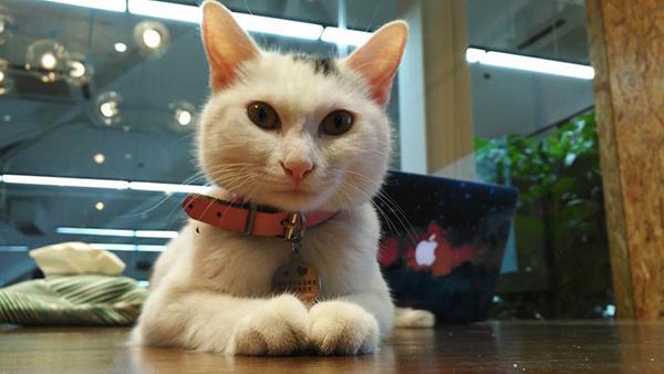 壁纸 动物 狗 狗狗 猫 猫咪 小猫 桌面 600_338图片
