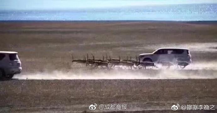在该网友发布的照片中,可以看到一辆越野车紧贴着一群羚羊类的动物.