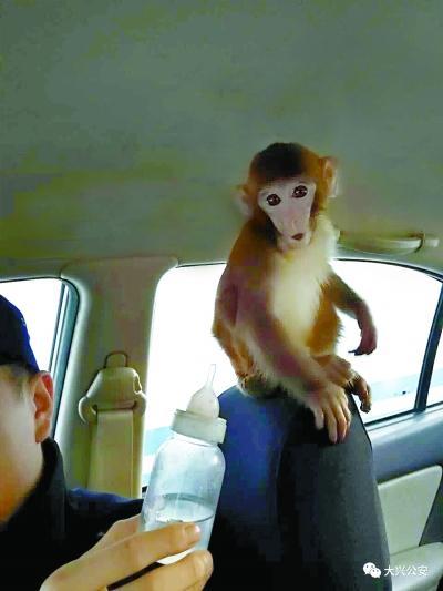 """家中被翻乱七八糟 """"嫌疑猴""""已被民警抓获"""
